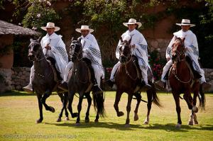 Horse Exhibition Tour Packages